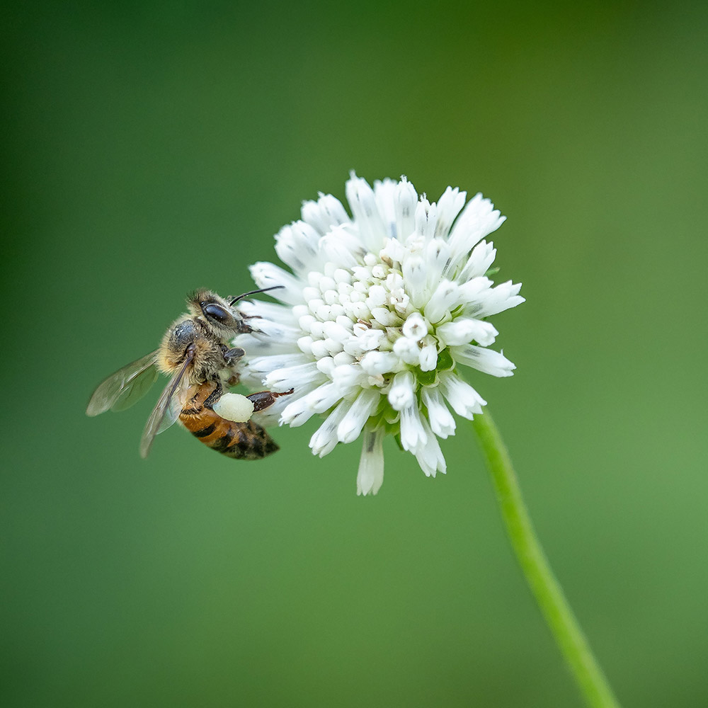 Photograph of a bee on a flower